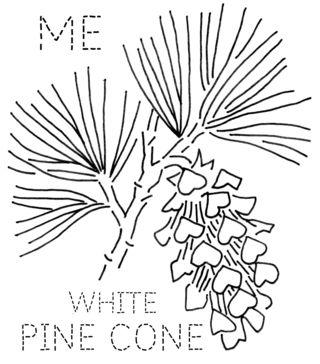 ME-PINECONE