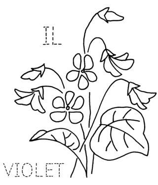IL-VIOLET