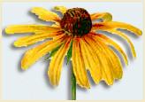 Bes_flower