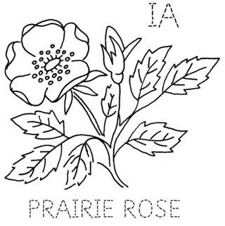 IA-PRAIRIEROSE