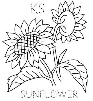 KS-SUNFLOWER