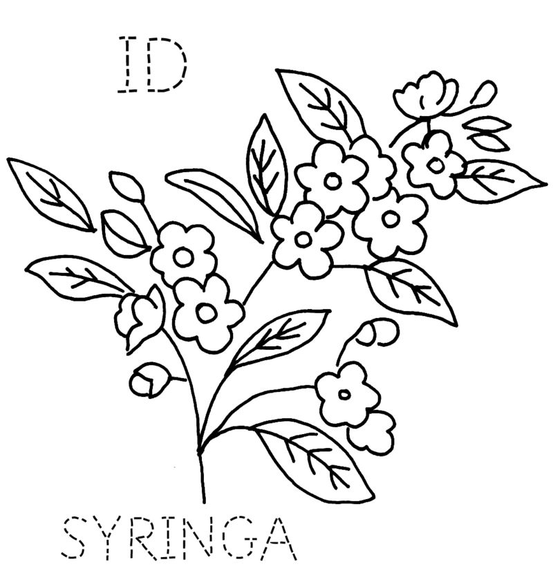 ID-SYRINGA