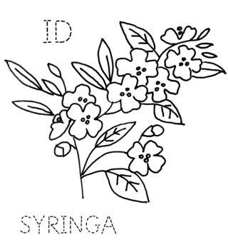 ID-SYRINGA2