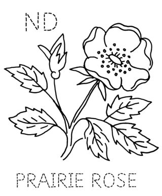 ND-PRAIRIEROSE