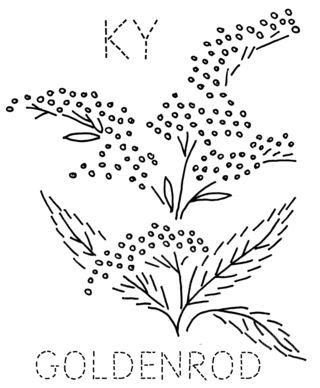 KY-GOLDENROD
