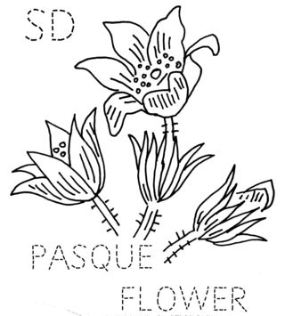 SD-PASQUE