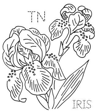 TN-IRIS
