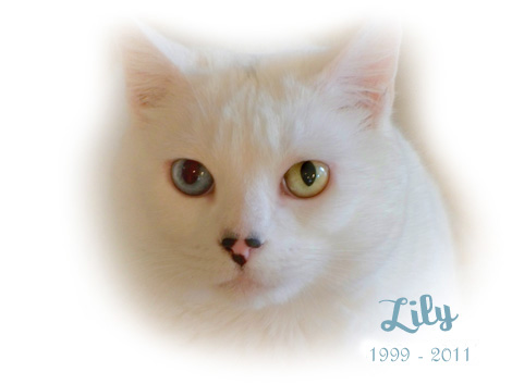 LILY1998-2011