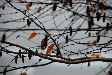 Turkeyfeatherblog-11-16-11d