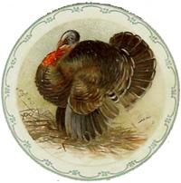 Turkey-plate