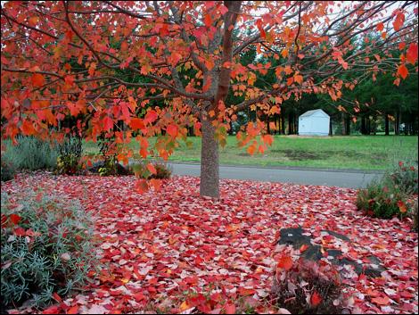 Falling_leaves1