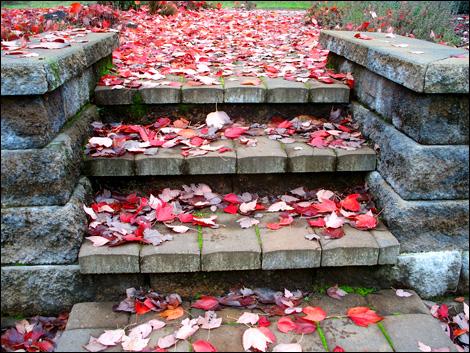 Falling_leaves2