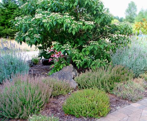 Herbal-landscaping
