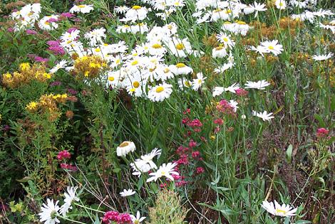 Wildflowers_1295