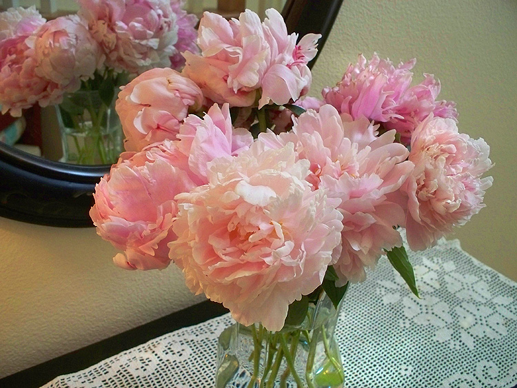 Peonies_6-18a