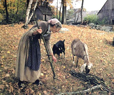 Tasha_tudor_goats