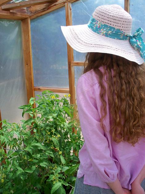 Tomato_plants_2