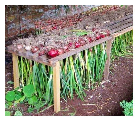 Onion-drying-rack