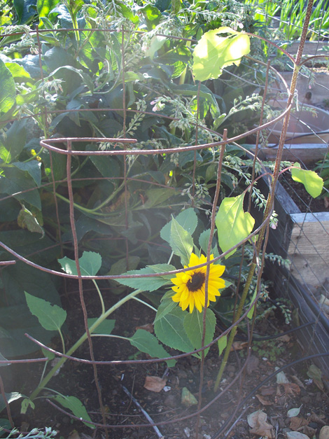 Backyard-garden-1